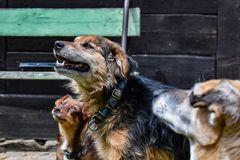 Fundacja im. Maćka Kozłowskiego Pan i Pani Pies