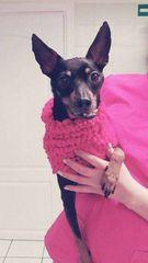 Fundacja Zielony Pies Fundacja Zwierząt Skrzywdzonych
