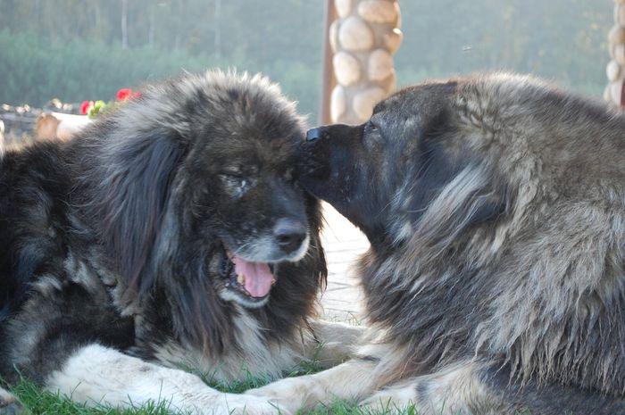 Fundacja HUG me - przytulamy zwierzęta
