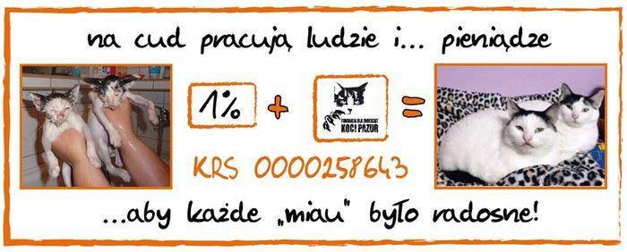 """Fundacja dla Zwierząt """"Koci Pazur"""""""