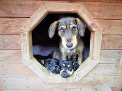 Fundacja RUNA - Pomoc Zwierzętom