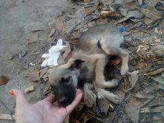 Pomoc dla schroniska Friend na Ukrainie