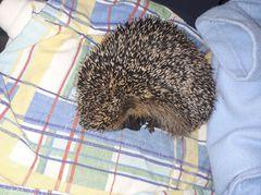Towarzystwo Opieki nad Zwierzętami w Polsce Oddział we Wronkach