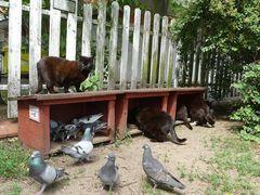 Fundacja Koty SOS