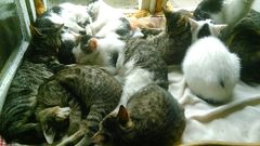Radomszczańskie Towarzystwo Opieki nad Zwierzętami
