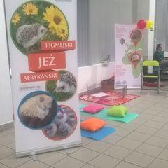 Popularyzacja informacji o jeżach europejskich i pigmejskich
