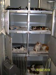 Stowarzyszenie Obrona Zwierząt