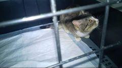 Towarzystwo Opieki Nad Zwierzętami w Kętrzynie