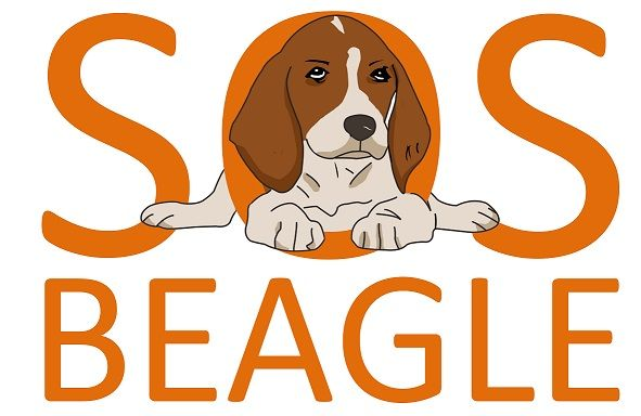 """Stowarzyszenie """"SOS Beagle"""" - logotyp/zdjęcie"""