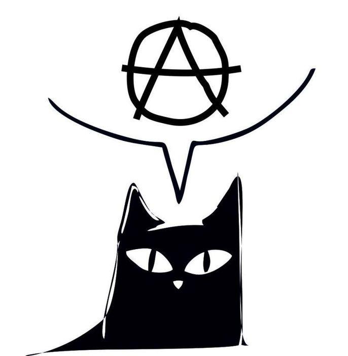"""Fundacja """"Koty z Kociej"""" - logotyp/zdjęcie"""