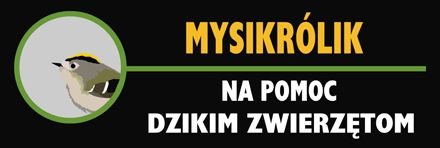 Fundacja Mysikrólik - Na pomoc Dzikim Zwierzętom - logotyp/zdjęcie