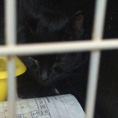 kastracje i leczenie kotów wolno żyjących