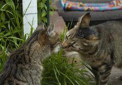 """Fundacja św. Franciszka """"Pomóż zwierzętom - naszym małym braciom"""""""