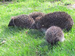 Fundacja Na Rzecz Ochrony Dzikich Zwierząt Primum