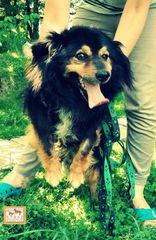 Społeczne Towarzystwo Opieki nad Zwierzętami w Sanoku
