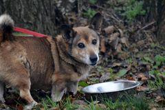 """Stowarzyszenie Pomocy Bezdomnym Zwierzętom """"Słońce dla zwierząt"""""""