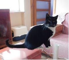 Fundacja Szanowny Pan Kot