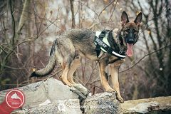 Fundacja IRMA - Psy w Służbie Człowieka